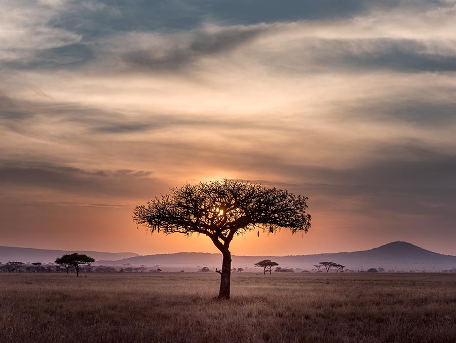 Αφρική ταξίδι ζωής